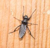 昆虫 — 图库照片