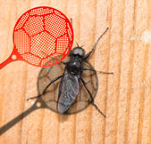 Insect killer — Stock Photo