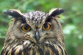 Owl with big eyes — Stock Photo