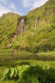 Green Azores — Stock Photo