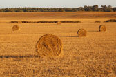 Hay landscape — Stock Photo