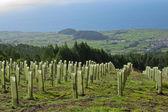 Terceira island — Stock Photo