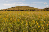 Alentejo landscape — Stock Photo