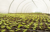 Greenhouse nursery — Stock Photo