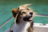 Happy dog on a boat — Stock Photo