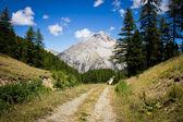A mountain path — Stock Photo