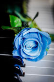 Blue rose on a piano — Stock Photo