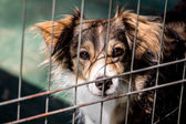 Dog behind bars — Stock Photo