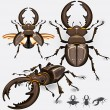 Stock Vector: Stag Beetle Insect