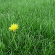 Dandelion — Stock Photo #12615649