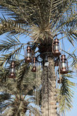 Vintage lanterns in a palm tree on the Corniche of Doha, Qatar. Middle East — Stock Photo