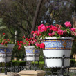 Flowerpots in Maria Luisa park in Seville, Spain - Stock Photo