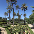 Palm trees and flowers in Maria Luisa Park. Seville, Andalusia, Spain — Stock Photo #24995353