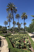 Palm trees and flowers in Maria Luisa Park. Seville, Andalusia, Spain — Stock fotografie