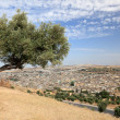 Stock Photo: Tree over old medinof Fes, Morocco, North Africa