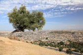 Tree over the old medina of Fes, Morocco, North Africa — Stock Photo