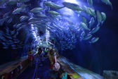 Glass tunnel in L'Oceanografic aquarium in Valencia, Spain — Stock Photo