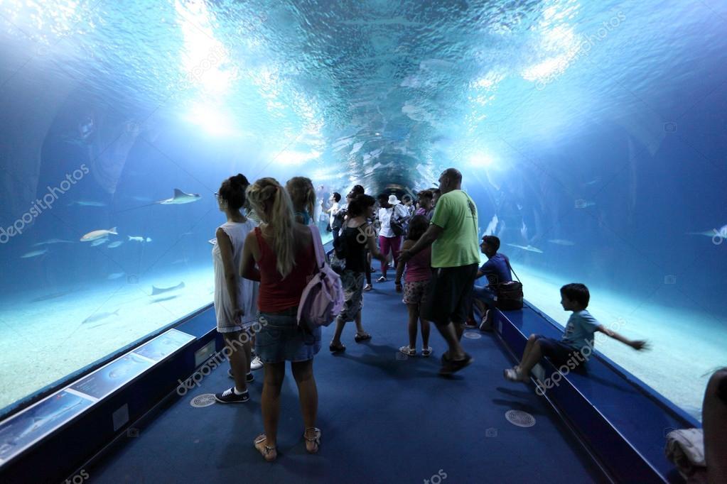 Visitantes en el t nel de cristal del acuario l for Aquarium valencia precio