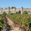 Stock Video: Vineyard in Carcassonne, France