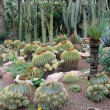 Stock Photo: Cactuses in botanical garden