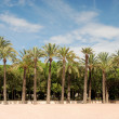 Park in Valencia, Spain — Stock Photo #31988465
