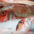 Fresh fish at market — Stock Photo