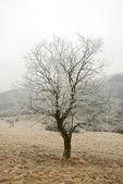 Tree in winter landscape — Stockfoto