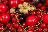 新鮮な果物の背景 — ストック写真