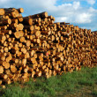 stapel hout — Stockfoto #32001783