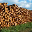 stapel hout — Stockfoto