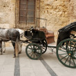 Horses and carriage for sightseeing in Cordova, Spain — Stock Photo #32012263