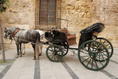 Horses and carriage for sightseeing in Cordova, Spain — Stock Photo