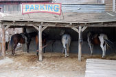 Horse parking place — Stock Photo