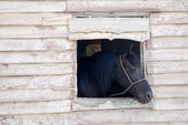 Horse looking out of the window — Stock Photo