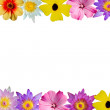 Floral border — Stock Photo