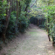 Stock Photo: Trail in forest of Lantau Island, Hong Kong