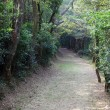 Trail in the forest of Lantau Island, Hong Kong — Stock Photo