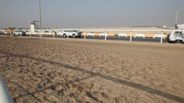 Camel race in Doha, Qatar — Vidéo