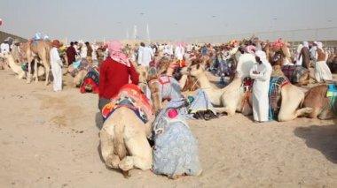 Bedouins with racing camels in Doha, Qatar — Vidéo