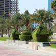 Trimmed hedge and date palm trees at the corniche in Doha, Qatar — Stock Photo #39488349