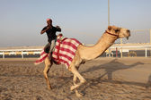 Racing camel trainer riding his dromedary in Doha, Qatar, Middle East — Stock Photo