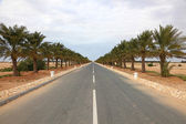 Alley with date palm trees in Qatar, Middle East — Foto Stock