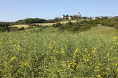 Canola field and ancient castle in the background. Hesse, Germany — Stok fotoğraf