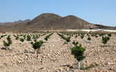 Agricultural landscape in southern Spain — Stockfoto