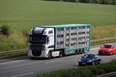 Animal transport truck on the highway in Germany — Stock Photo
