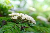 Fiore sfondo — Foto Stock