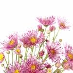 Beautiful flowers background isolated on white — Stock Photo