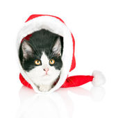 Kitten hides in red Santa Claus hat isolated on white background — Stock Photo