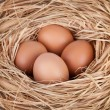 Stock Photo: Macro shoot of brown eggs at hay nest in chicken farm