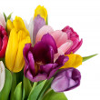 Beautiful spring tulips flowers - Stock Photo